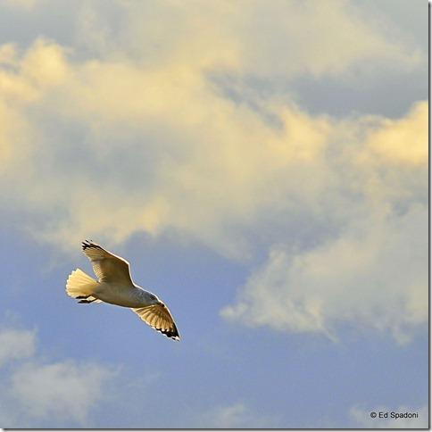 2guysphoto.com