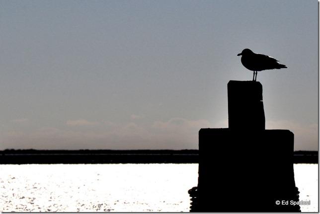 Seagull on pier, Boston Harbor