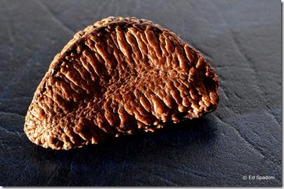 Brazil nut in shell, side lit, texture