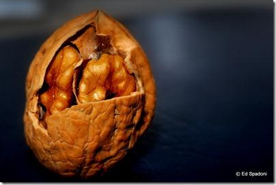 Walnut in shell, side lit, texture