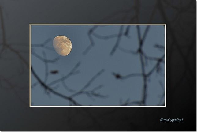 framed full moon through trees