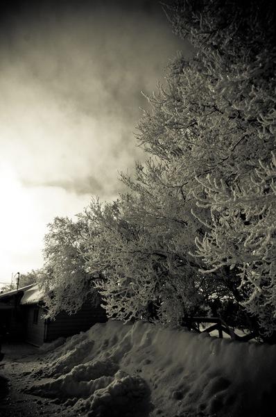 hoar_frost.jpg