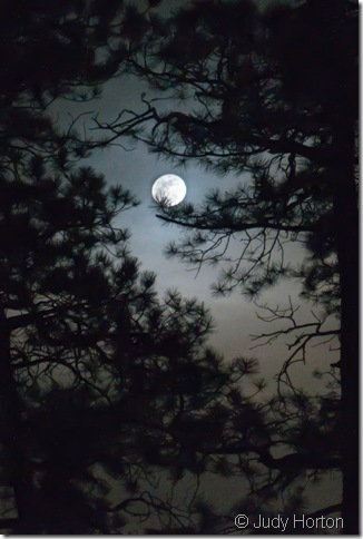 Perigee Moon through the trees by Judy Horton