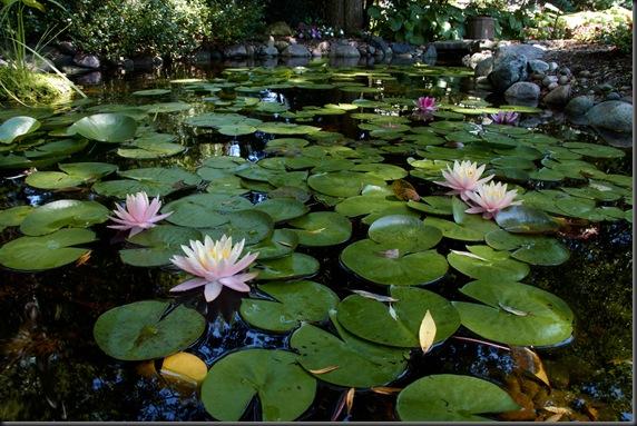 pond IMG_7475