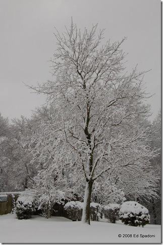 Tree in snow, P, f/7.1, 1/200 sec, EV 0