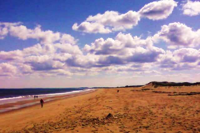 Plum Island Perfection with Crop