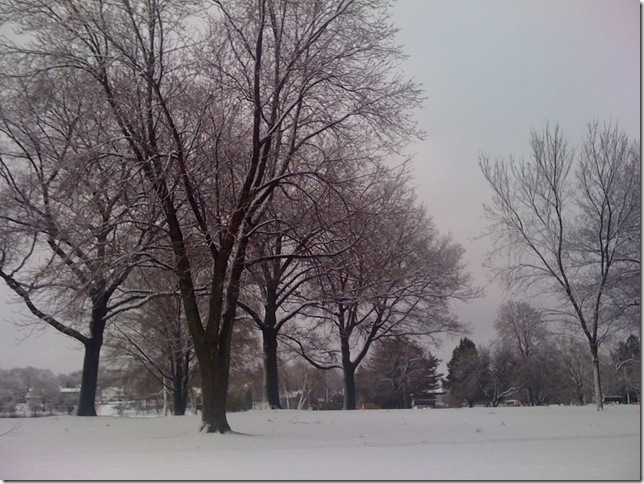 Snowy trees before Clarity