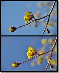 tree bud collage, circular polarizer