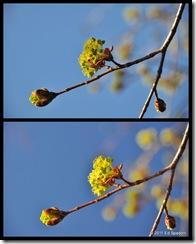 tree bud collage, circular polarizer