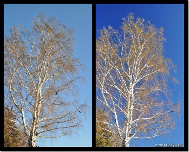 trees collage, circular polarizer