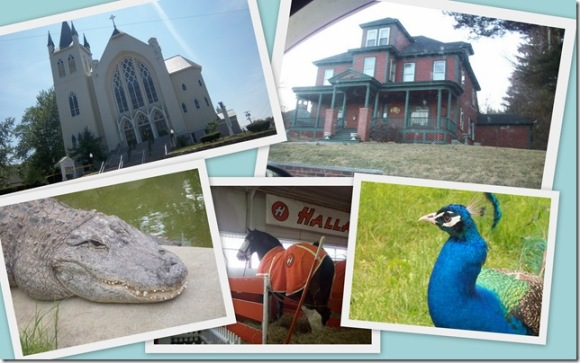 Church, house and animals by Kyle