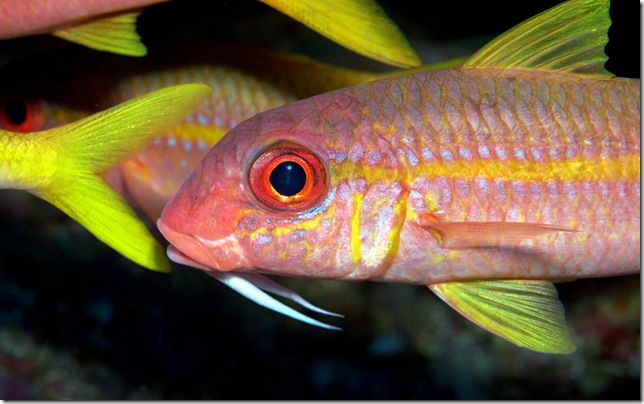 Small pink tropical fish swimming in the Grotto by Mark James