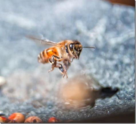 Bee by Judy Horton