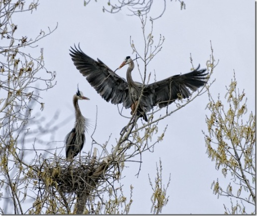 Bringing a Branch to the Missus! (Sedona) by Judy Horton