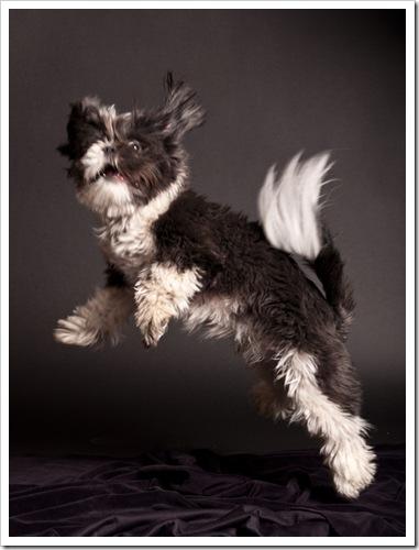 Max jumping