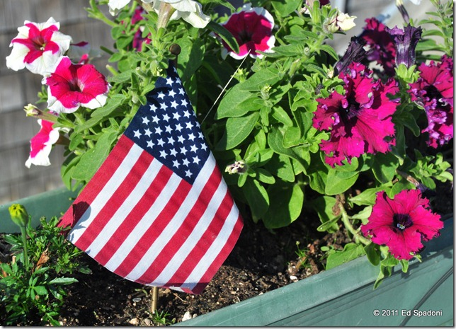 A US flag and colorful petunias