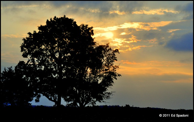 Sunset behind a tree on farm