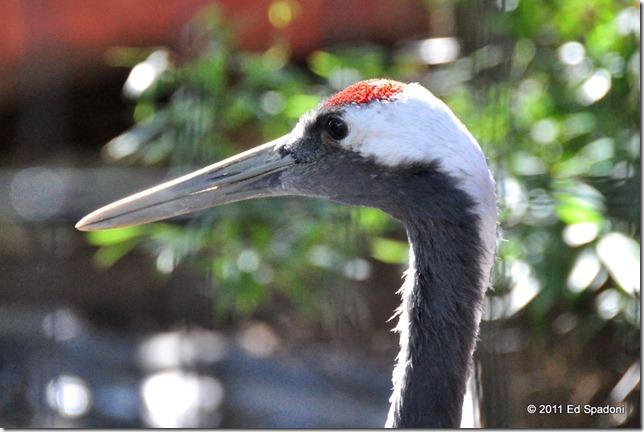 Long billed grey bird at the zoo