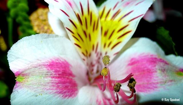 """""""Flower"""""""
