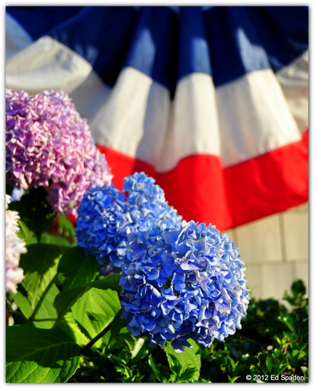 2 guys photo, bunting,flag, hydrangea, summer, sunset