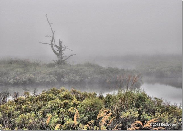 Fog in the bog, at the Seawall, Mt. Desert Island, Maine