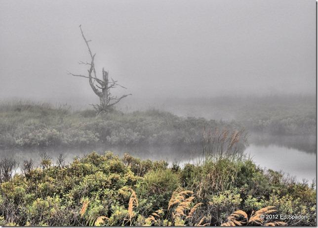 Fog in the bog, at the Seawall, Mt. Desert Island, Maine