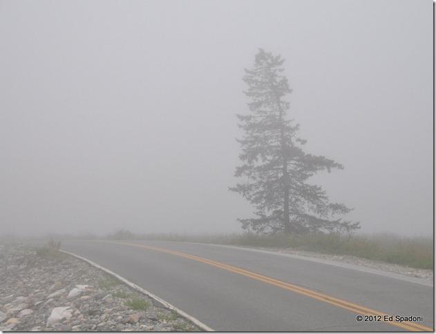 Mt Desert Island fog at the Seawall