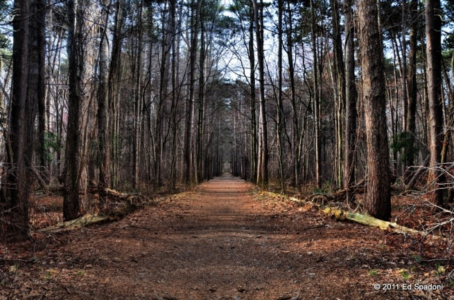 path, woods, cutler park, 2 guys photo