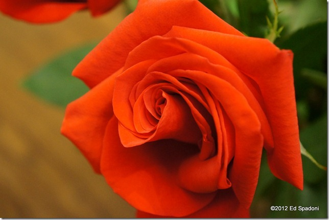 Aperture priority, Sony NEX 5N, 2 guys photo, rose, red
