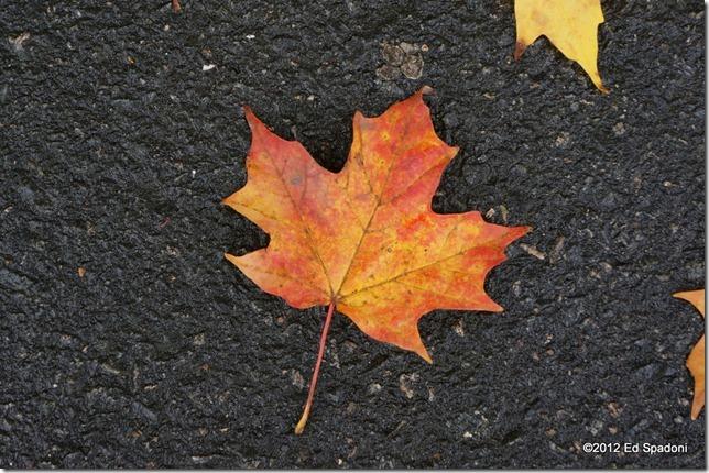 Macro mode, Sony NEX 5N, 2 guys photo, leaf, fall