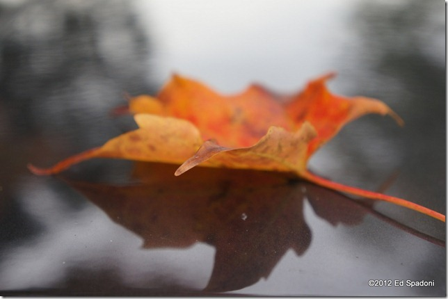 Macro mode, Sony Nex 5N, 2 guys photo, leaf, fall