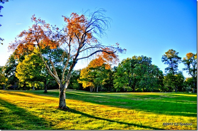 autumn, fall, HDR, park, 2 guys photo