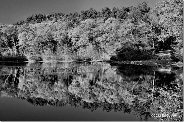 rocky woods, chickering, pond, foliage, fall, autumn, black and white, 2 guys photo