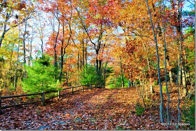 rocky woods, foliage, fall, autumn, color, 2 guys photo, country, road