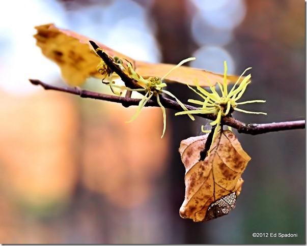 rocky woods, foliage, fall, autumn, color, 2 guys photo