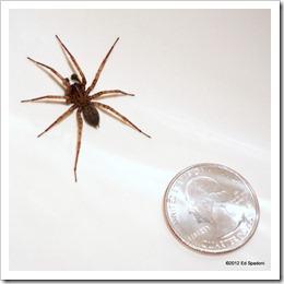 Spider, Sony NEX 6, 2 guys photo