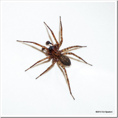 Spider, Sony NEX 6, 2 guys photo