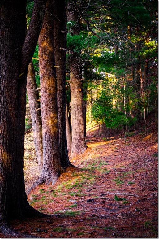 Thoreau, path, woods, 2 guys photo