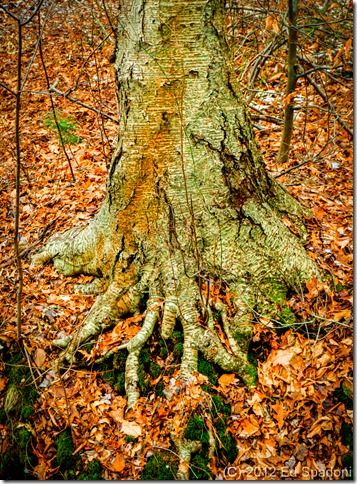 2guys photo, tree, forest, ageless, NEX 6