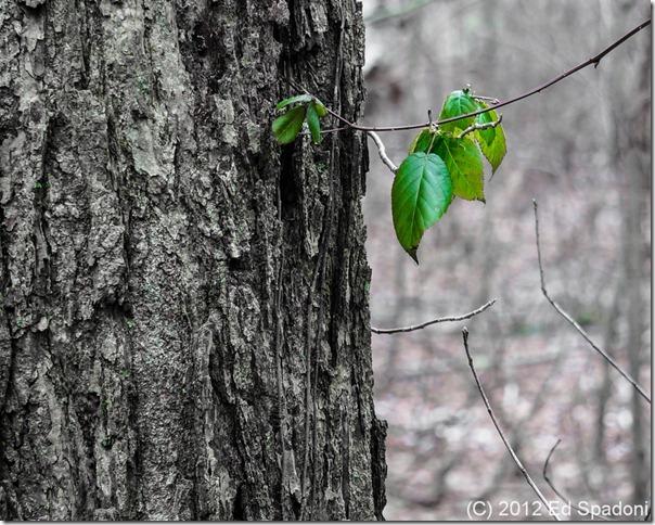 tree, leaf, gree, forest, color, grey, 2 guys photo, NEX 6