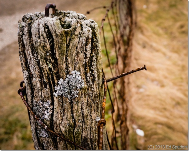 fence, nail, 2 guys photo, Sony NEX 6