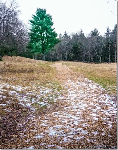 tree, forest, winter, hope, 2 guys photo, Sony NEX 6