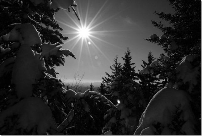 Winter woods by Rodney Daly