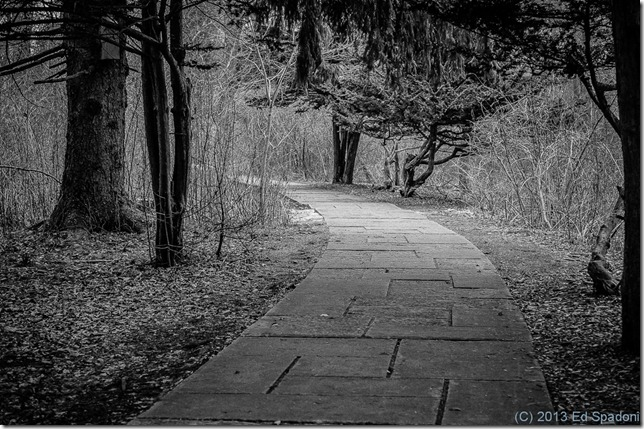 wander, path, lost, looking, black and white, B&W, Sony NEX 6