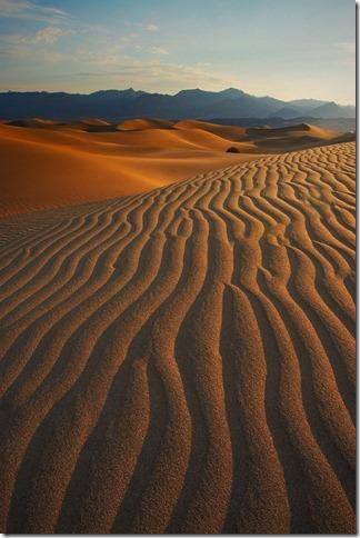 Patterson Mesquite Dunes