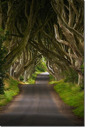 Patterson The Dark Hedges