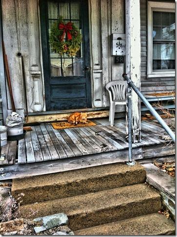 The guardian at the door, cat, door, city, iPhone