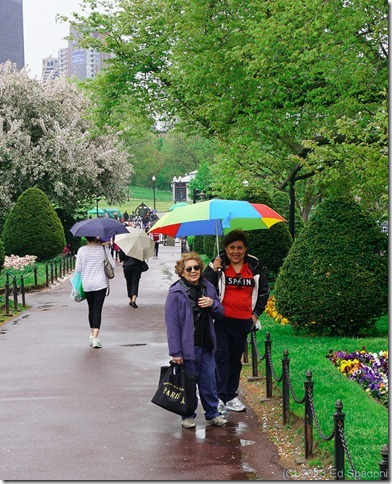 boston, public garden, sony NEX 6, lightroom 4