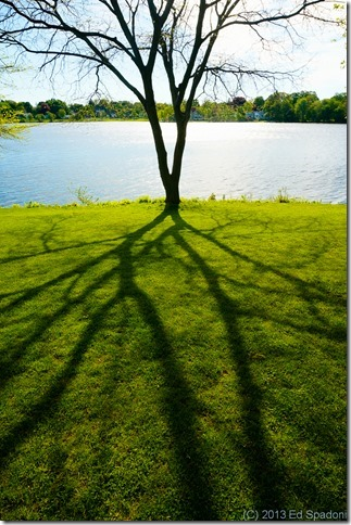 tree, shadow, light, life
