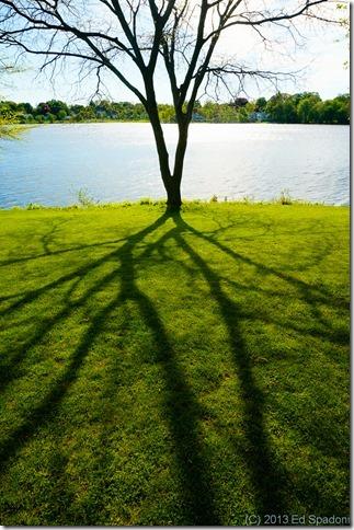 tree, shadow, light, life